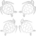 set of four turtles on the isolated white background