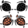 set of four turtles on the isolated background