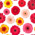 Seamless Pattern from Vibrant Gerbera Flowers Stock Photography