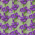 Seamless pattern from vintage crocuses spring purple Stock Image