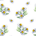 Seamless pattern with watercolor camomile flowers and petals on white background