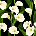 Seamless pattern with white calla lilies on black and leaves a background Royalty Free Stock Images