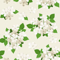Seamless pattern with white flowers plumbago and green leaves Stock Photography