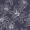 Seamless pattern white lily on a black background vector illustration Royalty Free Stock Image