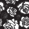 Seamless pattern white roses on a black backgroun background vector illustration Royalty Free Stock Images