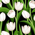 Seamless pattern with white tulips on black and green leaves a background Royalty Free Stock Image