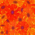 Seamless pattern yellow-orange flower. Stock Images