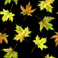 Seamless patttern with leaves Royalty Free Stock Photo