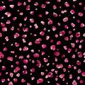 Seamless Pink Rose Petals on Black Royalty Free Stock Photo