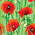 Seamless of poppy Royalty Free Stock Images