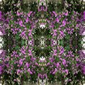 Seamless Purple flowers and Green leaves pattern,autumn plant leaf background,Purple flowers of Bungor