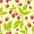 Seamless raspberries pattern. Stock Images