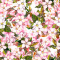 Seamless repeated floral pattern - pink cherry and apple flowers. Watercolor