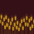Seamless repeating wheat, rye or barley field pattern. vector Royalty Free Stock Photo