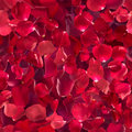 Seamless rose petals in depth repeatable red each one studio photographed at different exposure to achieve gradual color shades Stock Photo