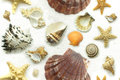 Seamless Seashell Background Royalty Free Stock Image