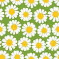 Seamless summer camomiles pattern. Stock Image
