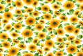 Seamless sunflowers pattern on a white background