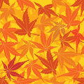 Seamless texture with autumn maple leaves Stock Photography