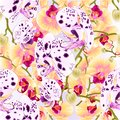 Seamless texture branch orchids dots white and purple and yellow flowers Phalaenopsis tropical plant nature background vintage Royalty Free Stock Photo