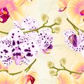 Seamless texture branch orchids flowers yellow ,dots purple and white Phalaenopsis tropical plant stem and buds on a white backg Royalty Free Stock Photo