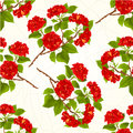 Seamless texture branch red hibiscus tropical flowers on a white background vintage vector