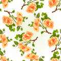 Seamless texture branch yellow hibiscus tropical flowers on a white background vintage vector