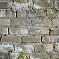 Seamless texture from dirty moldy brick wall Royalty Free Stock Photos
