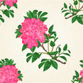 Seamless texture flowers pink rhododendron twig Mountain shrub vintage crack vector