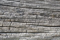 Seamless texture of old wood with cracks.