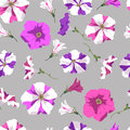 Seamless texture of petunia flowers on a gray background. Vector illustration