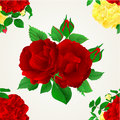 Seamless texture Red purple and yellow rose with buds and leaves vintage vector