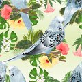 Seamless texture three birds Budgerigars, home pets ,blue pets parakeets on a branch bouquet with tropical flowers hibiscus, palm