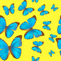 Seamless texture tropical butterflys morpho menelaus on a yellow background Stock Image