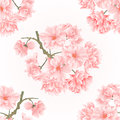Seamless texture twig tree sakura blossoms vintage hand draw natural pink background vector