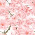 Seamless texture twig tree sakura blossoms vintage natural pink background vector illustration editable Royalty Free Stock Photo