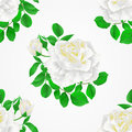 Seamless texture white Rose with buds and leaves vintage Festive background vector