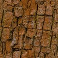 Seamless tree bark background. Brown tileable texture of the old tree