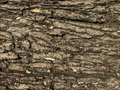 Seamless tree bark texture of background
