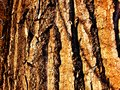 Seamless tree bark texture. Endless wooden background for web