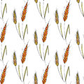 Seamless vector background with wheat spikelets.