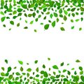Seamless vector floral pattern background. Green leaves backdrop. Hibiscus leaves realistic vector repeatable border