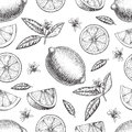 Seamless Vector hand drawn lime or lemon. Whole , sliced pieces half, leave sketch. Fruit engraved style illustration Royalty Free Stock Photo