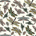 Seamless vector hand drawn pattern with fantasy butterflies, dragonflies, beetles, bugs and mothes. Royalty Free Stock Photo