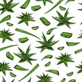 Seamless vector pattern of aloe vera branch and leaves. Hand drawn. Engraved colored medical, cosmetic plant