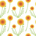 Seamless vector pattern with flowers. Background with orange dandelions and leaves on the white backdrop