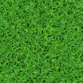 Seamless vector texture of fresh green grass on lawn