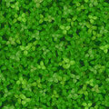 Seamless vector texture of a lawn covered with clover