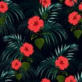 Seamless vector tropical pattern with dark palm leaves and tropical red hibiscus flowers on black background. Royalty Free Stock Photo
