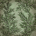 Seamless vintage background with rosemary hand drawn plant eps Stock Photography